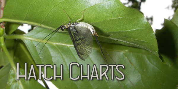 Hatch Chart